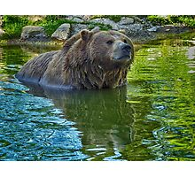 Brown bear in water  Photographic Print