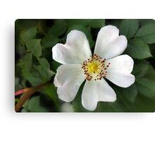 bright white flower Canvas Print