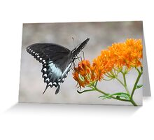 Swallowtail On Milkweed Greeting Card