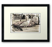 Seagull with Dangling Starfish Framed Print