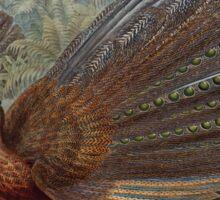 Birds of Asia John Gould 1883 V1 V7 510 Argusianus Argus Sticker