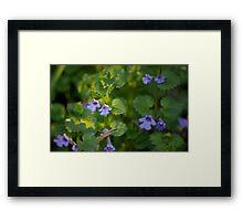 Ground-Ivy Blossoms Framed Print
