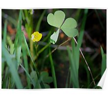Lone Buttercup and Clover Leaf Poster