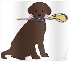 Preppy Chocolate Lab Lacrosse Dog Poster