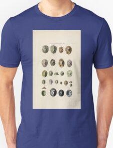 Thesaurus conchyliorum Monographs of genera of shells George Brettingham Sowerby 1887 V1-V5 355 T-Shirt