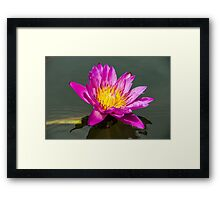 Outback Lily Framed Print