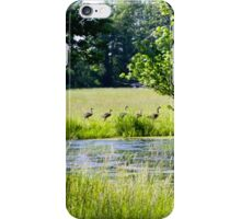 CANADIAN GEESE FAMILY iPhone Case/Skin
