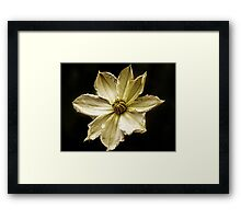 May Bloom Framed Print