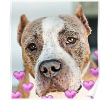 Pit Bull Dog - Pure Love Poster