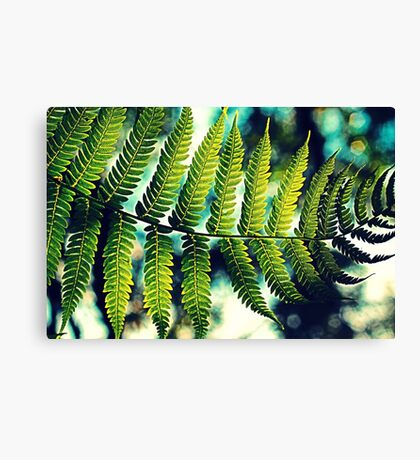 Fern For You Canvas Print