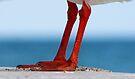 Sea Legs by Maree Cardinale