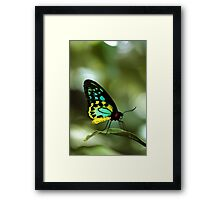 Butterfly by Gaye G Framed Print