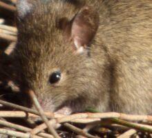 Australian Wildlife - Marsupial Mouse Sticker