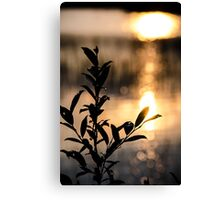 Silhouette Stems Canvas Print