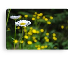 What's up Buttercup? Canvas Print