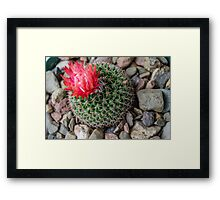 Beauty in the Madness Framed Print