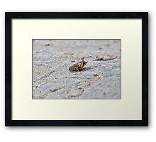 Treman Frog Framed Print