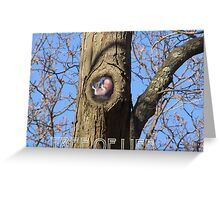 (The Tree of Life) Greeting Card