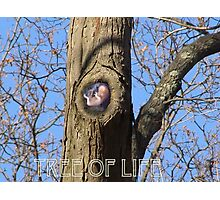 (The Tree of Life) Photographic Print
