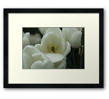 Rain drops on White Tulips Framed Print