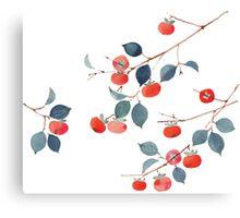Persimmon Harvest Canvas Print
