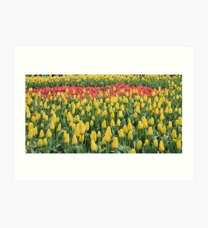 Tulip Time at Bowral Art Print