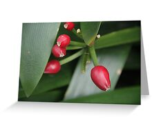 Red Seeds Greeting Card