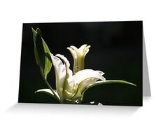 Japanese Lily Greeting Card
