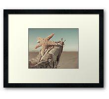 Sugar Starfish On the Beach Framed Print