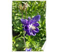 glowing purple flower Poster