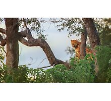 Leopard's Waterside Perch Photographic Print