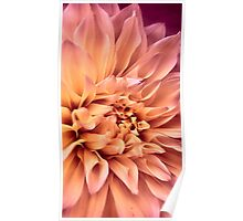 Dahlia in Bloom Poster