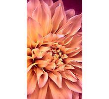 Dahlia in Bloom Photographic Print