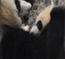 Giant Panda and cub (Bao Bao) Sticker