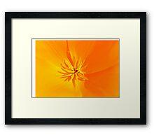 California Poppy - Eschscholzia californica Framed Print