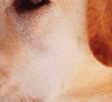 Dog breeds - Labrador Retriever Sticker