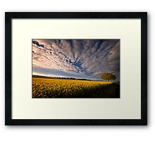 Dizziness of Spring Framed Print
