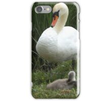 A family Photograph of the Swan and the cygnets iPhone Case/Skin
