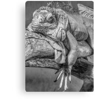 Lizard in black and white Canvas Print