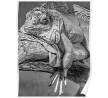 Lizard in black and white Poster