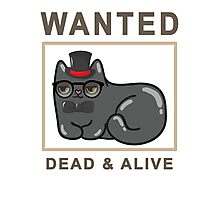 Funny Wanted Cat Dead & Alive Graphic Novelty Photographic Print