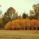 Colores de otoño............... by cieloverde