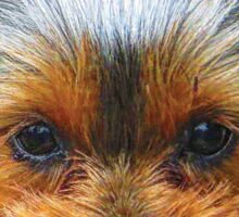 Printing dogs - Yorkshire Terrier Sticker
