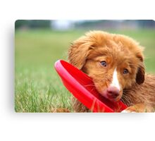 Toller Puppy with Frisbee Canvas Print