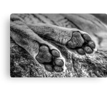 Tiger Feet Canvas Print