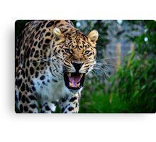 Amur Leopard (7) Canvas Print