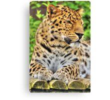 Amur Leopard (8) Canvas Print