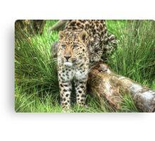 Amur Leopard (9) Canvas Print