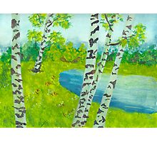 The birch tree forest Photographic Print