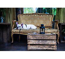 French bulldog siesta in Paris Photographic Print